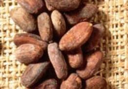 Diferentes tipos de cacao - forastero