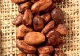 Diferentes tipos de cacao - trinitario