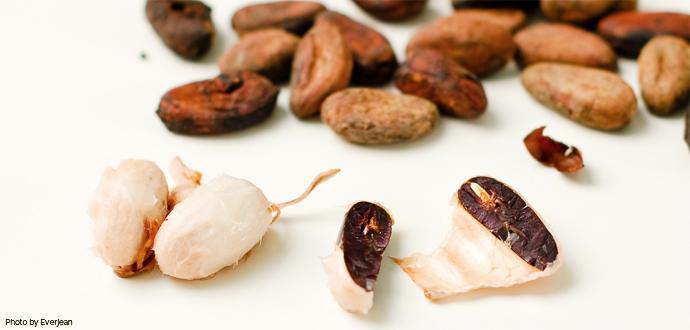 Tipos de cacao