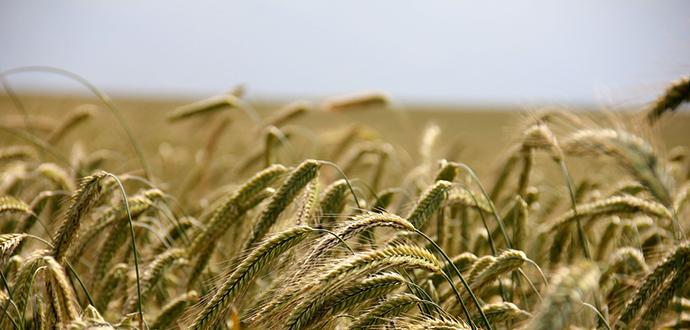 Sin gluten cereales creative signatures